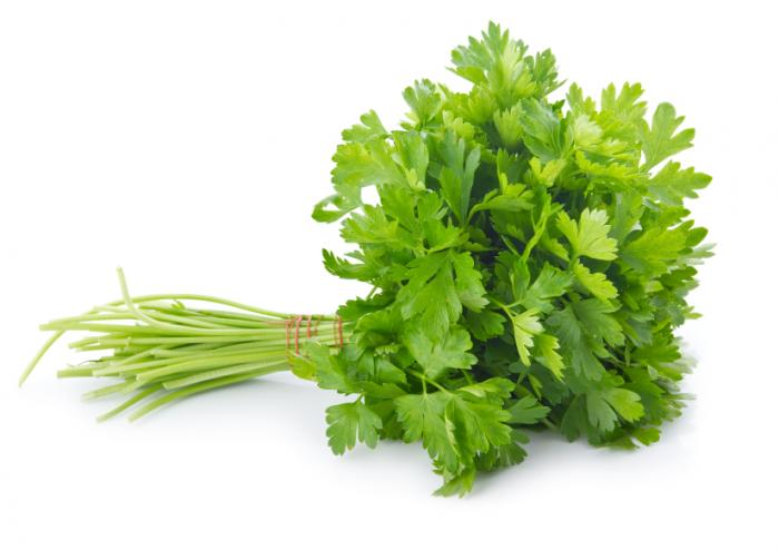 organic parsley variety of curly and italian flat earthorigins