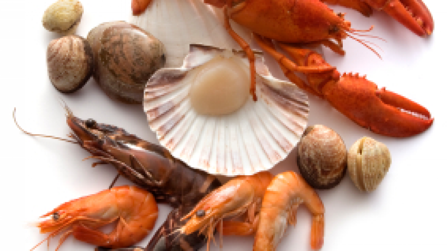 Are Shellfish (and Fish) Safe?